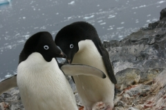 Antártica-II-070